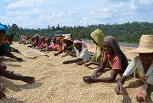 Peeze Foundation / Better coffee for a better world