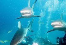 moje zdjęcia podwodne