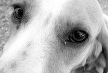 """Vira-Latas Os verdadeiros Cães de raça / Os Vira-latas, ao contrário do que algumas pessoas pensam, muitas vezes têm raça. Ser um vira-lata é um """"estado social"""", significa estar abandonado e vivendo nas ruas, seja um animal de raça ou não e pode se estender numa relação com o homem: abandonado, que sofre de preconceitos, fruto da miscigenação de raças/culturas e que muitas vezes é """"obrigado"""" a lutar pela sua própria sobrevivência."""