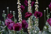 Blommor /Plantering
