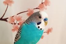 Budgies and other birds / Birds