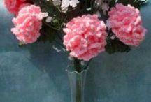 FLOWER >  CARNATIONS