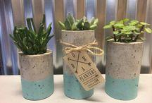 Plantas suculentas con maceta de barro