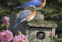 Hautman birds