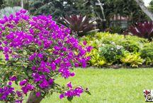 Best Tropical Garden Hotels