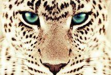 katachtige / verschilende sooryen katten. vat leeuwen naar tijgers en panters tot schatigge katjes en welpen