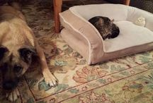 Cats Bullying Dogs