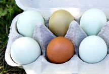 Høner og egg