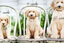 Photography Ideas - Pets