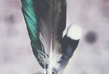 birds and feathers 》
