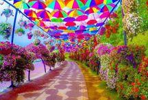 Amazing-Pretty