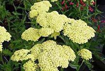 Blomsternavn vg2