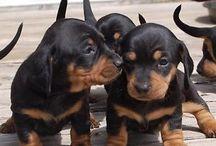 Puppy please