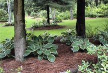 Plants under pine trees
