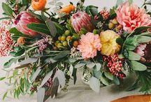 Floral reference Janssen