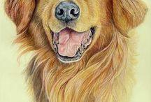 köpek resileri