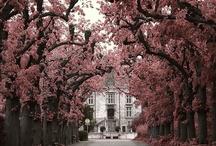 TREES / by bonnie m