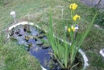 Garden Inspiration / by Emeka Patrick