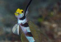 Aquarium Species