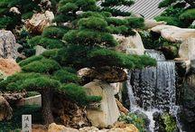 grădina japoneza