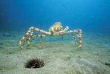 Animal Crab In Sea Wallpaper   Famous HD Wallpaper