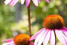 gardening / by germaine konate