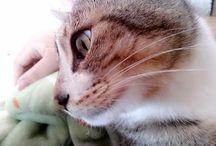 Mis gatitos (=^・ェ・^=)