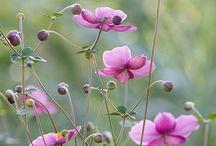 Vakre hager og hageblomster