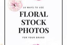 Photography | Stock Photos