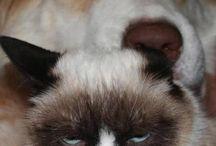 Grumpy Cat Rocks :D