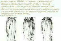 pantolon-etek