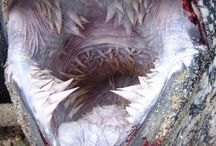 {Marine Biology   Oceanography} / by BeachChair Scientist