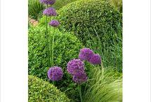 Elegant City Gardens / Planting ideas