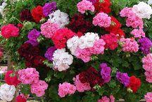 Yadigar ve çiçekler