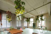Roderick Vos / Visí, svítí, šetří místo a koketují s ekologií. O co jde? Nizozemský designér Roderick Vos přišel s kombinací závěsného květináče, zásuvky a LED osvětlení. Výsledek je více než zajímavý, posuďte sami!
