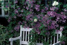 Blomsterinsp / Hageinspirasjon