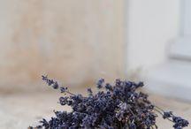 Lavender Around the World / by Ali'i Kula Lavender