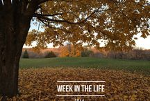 2014 Week in the Life