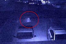 Entità Aliena viene registrata attraverso telecamera di sorveglianza. Video trasmesso in Tv...