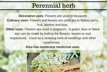 Herbs and uses