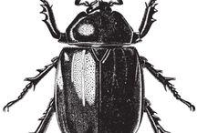 escarabajos, insectos...