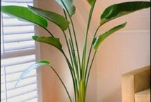 indoor plants, palms