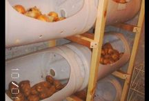 root cellar/food storage