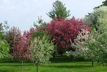 Aboretum / Botanical gardens devoted to TREES ....