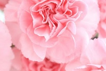 Blümchen / Blumen Blumen Blumen