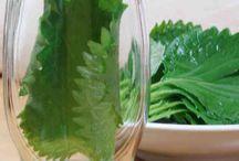 野菜保存方法