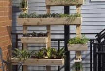 Plant timber wall