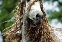 Images de chevaux / Nos plus belles images de chevaux