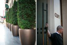 Courtyard / by Lauren Corbyn