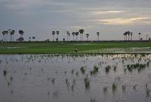 VIETNAM Avec Destination sur Mesure travel / Specialiste du Vietnam, rencontres et paysages l'Asie autrement avec wwww.destinationsurmesure.com